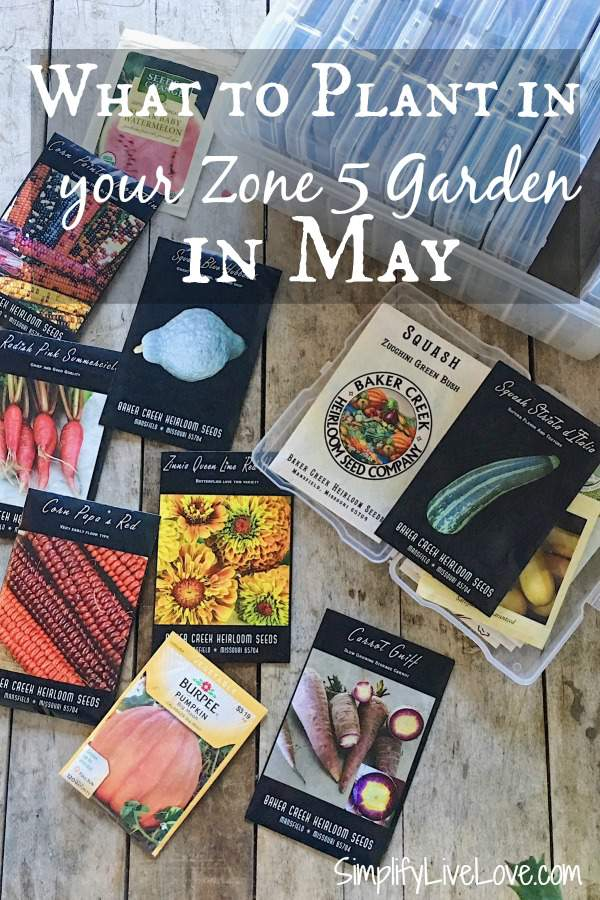 Wondering what to plant in your garden in May? This list of warm weather veggies to plant in May will help you achieve your zone 5 gardening goals!