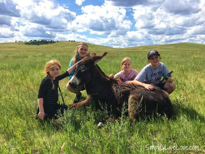 kids with the burros at Custer State Park