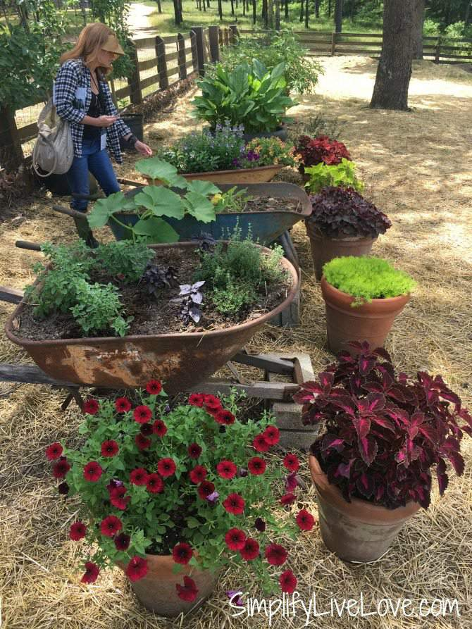 wheel barrow planters at Moss Mountain Farm