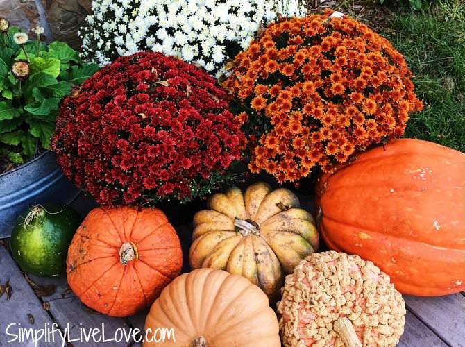 tips for keeping your fall mums beautiful