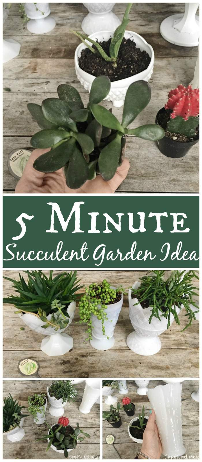 Looking for an easy succulent garden gift? This 5 Minute Upcycled Succulent Garden Gift makes a fabulous addition to your decor or a quick last minute gift idea! Super cute and easy upcycled garden craft!