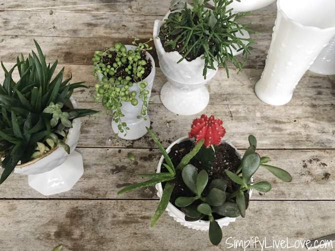 mini succulent garden idea makes quick gift