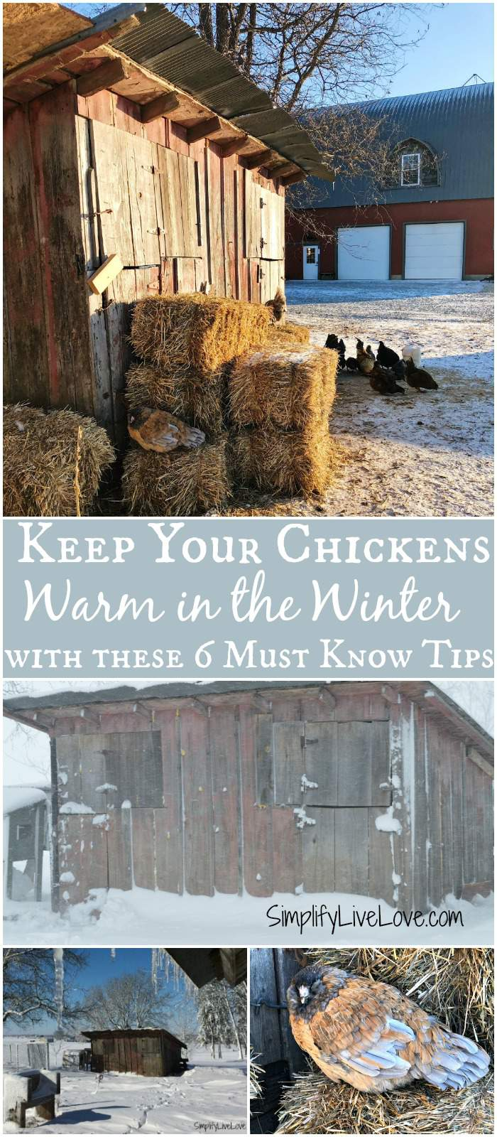 Wondering how to keep chickens warm in winter without electricity? These easy tips on keeping chickens warm in winter are a must read. Quick and easy changes to the winter chicken coop are helpful with or without electricity.