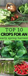 early spring harvest