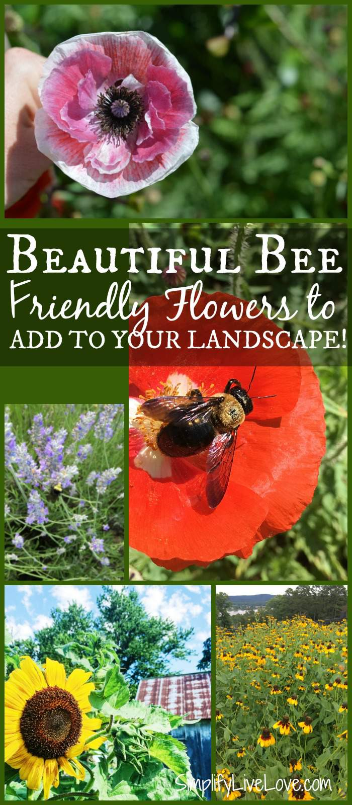 Beautiful Bee Friendly Plants For Your Landscape