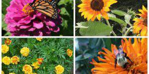 Beautiful Bee Friendly Plants For Your Landscape + Easy Ways Save the Bees