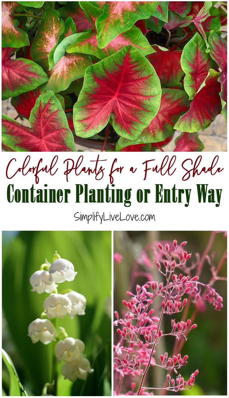 Colorful Shade Loving Perennials For Show Stopping Containers Simplify Live Love