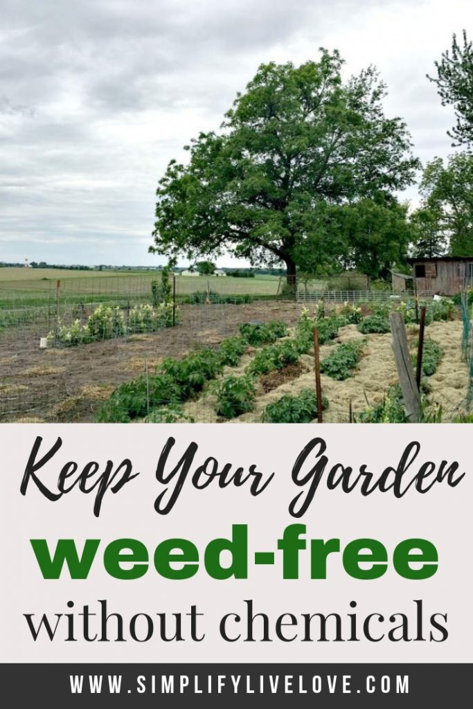 how to keep your garden weed-free