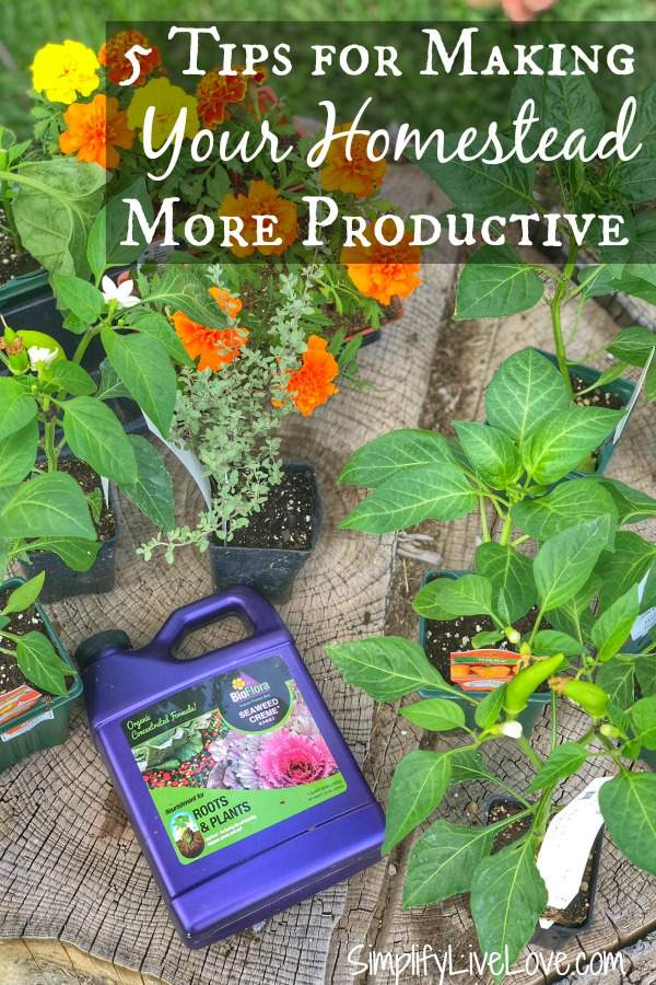 5 Ways To Make Your Homestead More Productive using organic plant food