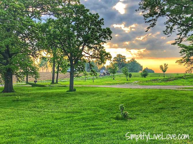 keep weeds down for a green lawn