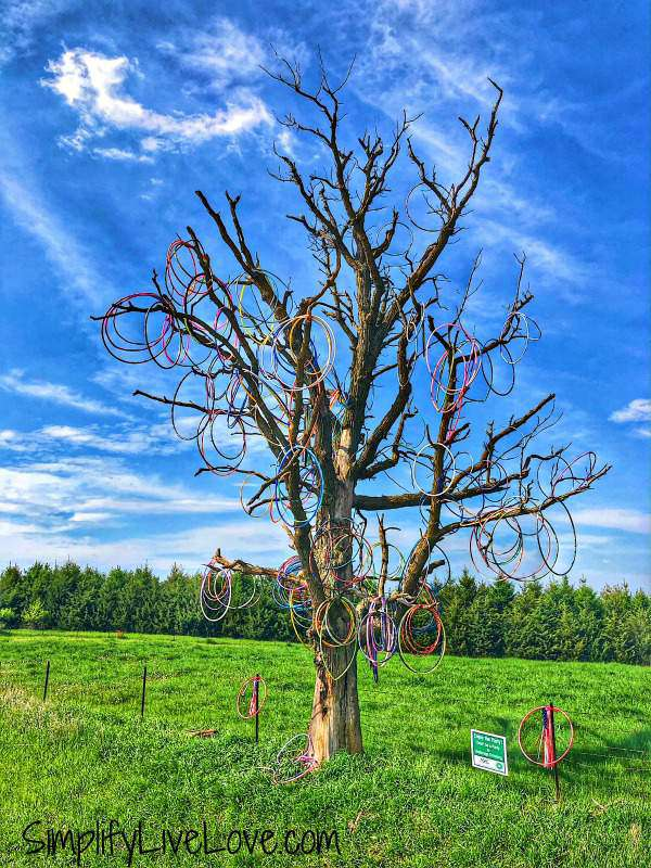 Eastern Iowa Hula-hoop tree in Jones County