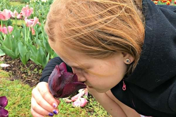 Fall Planting Guide for Beautiful Spring Flowering Bulbs