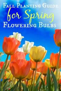 Fall Planting Guide for Spring Flowering Bulbs