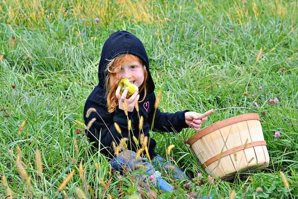 Wilson's Apple Orchard + 9 More Amazing Apple Orchards in Iowa