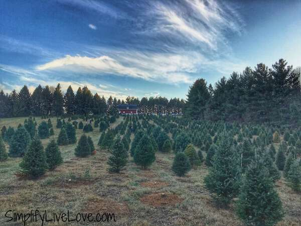 Kelly Tree Farm - one of many iowa tree farms where you'll find the best Christmas trees