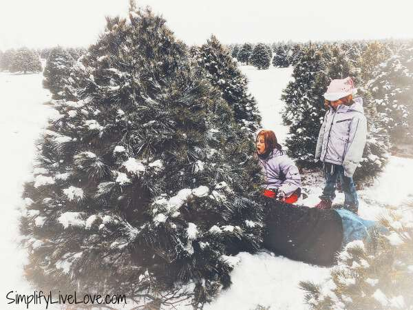 cutting down a christmas tree at up north pines in davenport iowa
