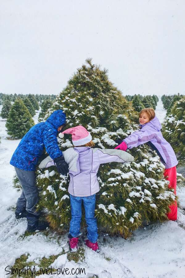 kids hugging a tree at up north pines