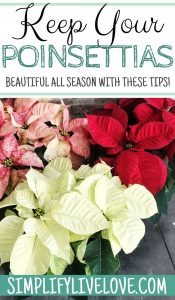 keep poinsettias beautiful