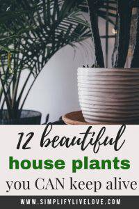 12 of the best house plants