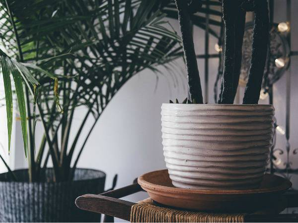 The 12 Best House Plants that You Can Keep Alive