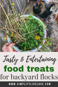 food treats for chickens