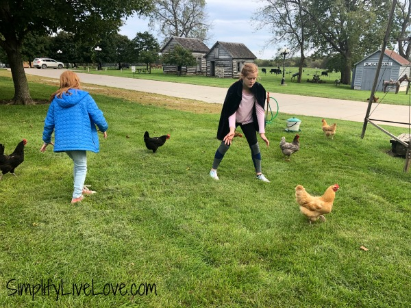 chasing chickens at the madison county historical complex