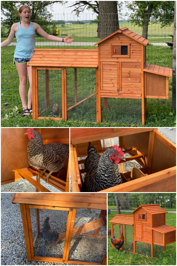 showing off the size of the bcp wooden chicken coop