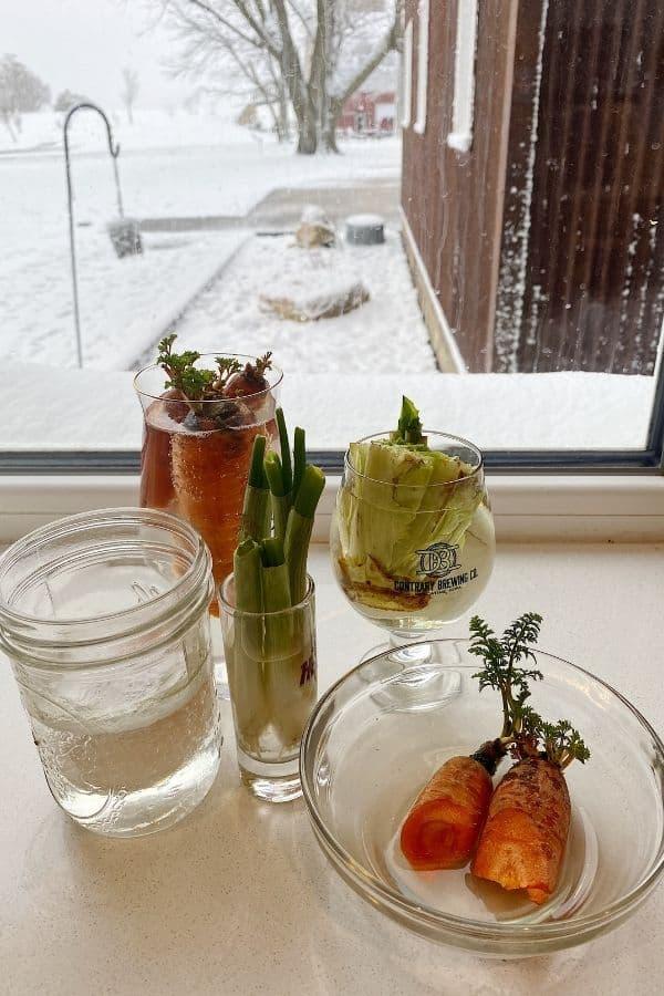 how to regrow vegetables in water (1)