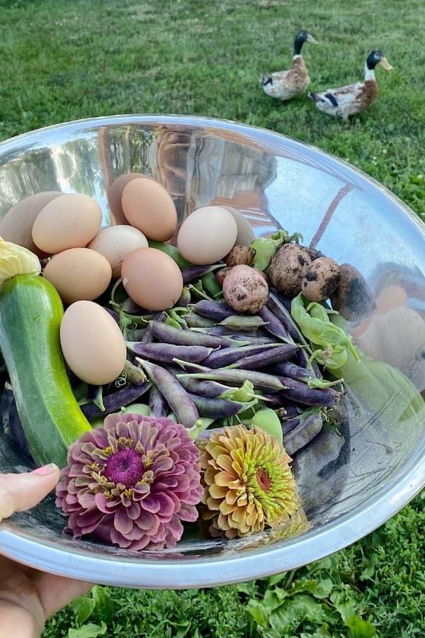 garden harvest bowl